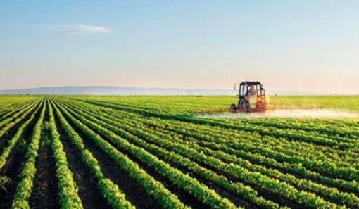 Incidencia COVID-19 en la agricultura